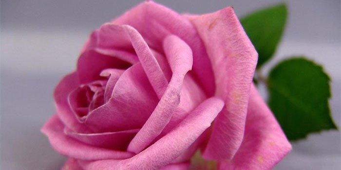 Большая роза из салфеток своими руками пошаговое 41