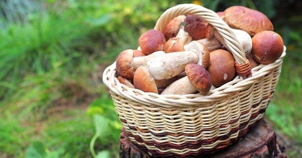 Собирать грибы во сне значение для беременных 91