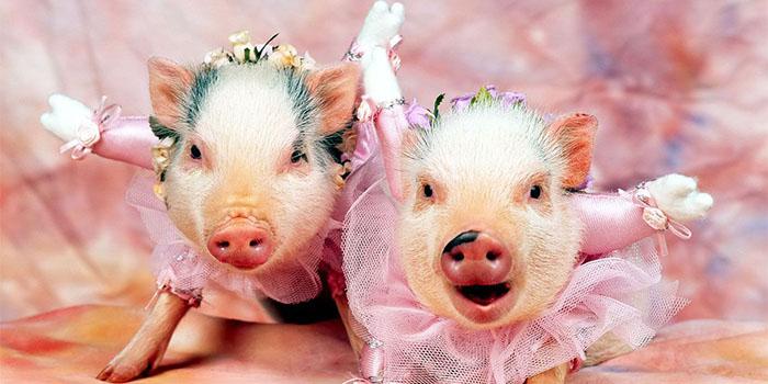 Поздравление с днем свадьбы двоюродной сестре от сестры красивые фото 650