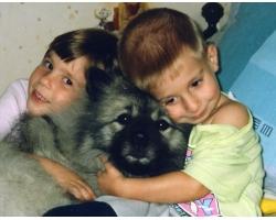 Лучшая порода собаки для 4-х летнего ребенка