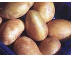 Картофельная диета и ее полезность