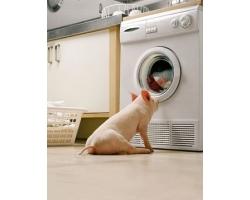 На что обращать внимание при выборе стиральной машины