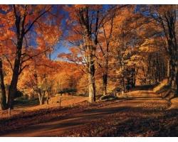 Осенняя хандра и как с ней бороться