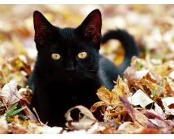 Приметы, связанные с кошками
