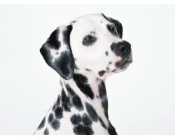 Самые известные зарубежные фильмы про собак