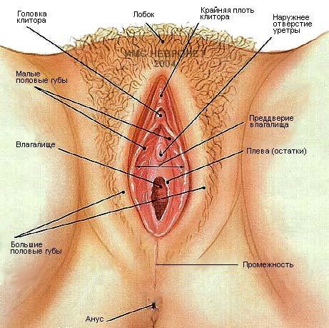 Половый дырки