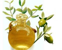 Польза и применение масла жожоба для волос и лица