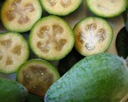 Фейхоа полезные свойства: польза и вред фрукта фейхоа