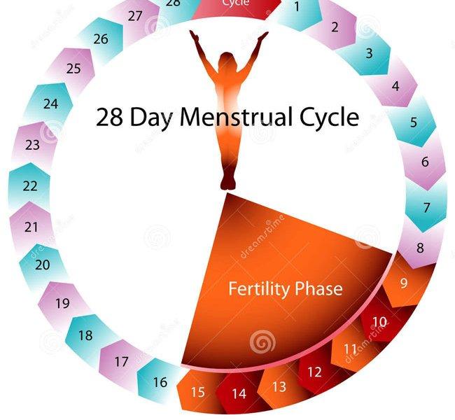 Месячный цикл у женщины безопасные дни секса