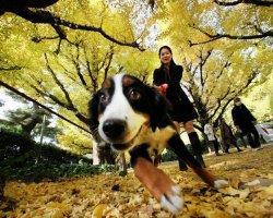 Болезни собак, которые могут быть опасными для человека