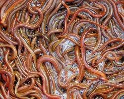 Видеть во сне червей и опарышей: что скажут сонники?