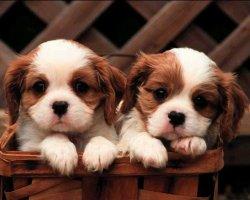 К чему могут снится щенки?