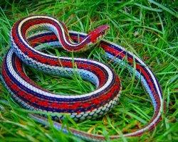 К чему может сниться змея в воде по толкованиям сонников?
