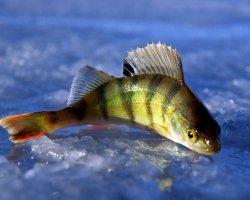 Ловить во сне рыбу удочкой