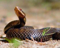 Укусила змея во сне, к чему это?