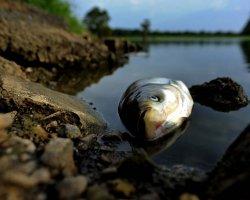 Толкования снов о мертвой рыбе
