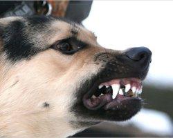 Видеть во сне, как собака нападает и кусает вас