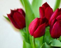 Поздравления любимой с 8 марта