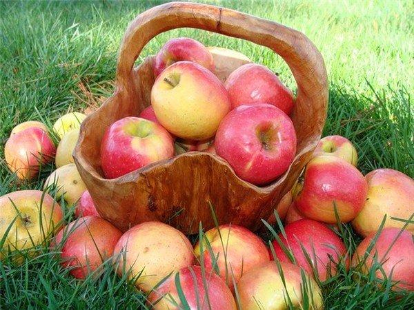 картинка яблочного спаса