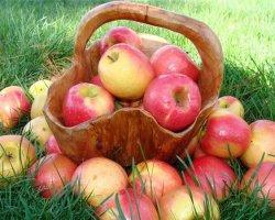 Дата празднования Яблочного Спаса 2016. Обряды и приметы