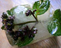 Кубики красоты: делаем дома ледяной тоник для лица
