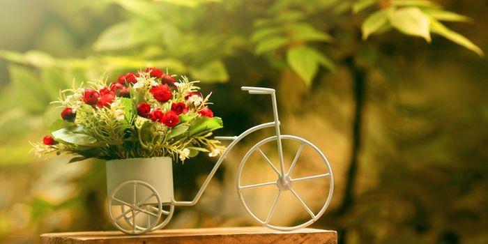 Лунный календарь комнатных растений 2016. Благоприятные и неблагоприятные дни