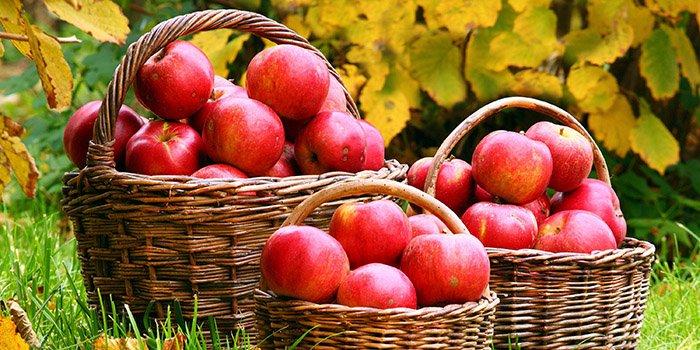Яблоки на зиму — рецепты и заготовки в 3-литровых банках: компот, пюре, без сахар, дольками.  Хранение яблок зимой в домашних условиях