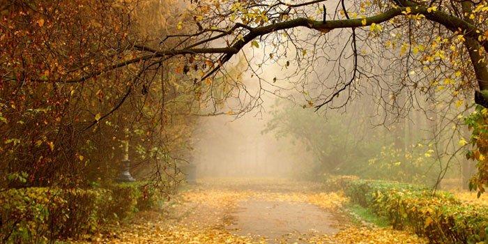 Погода в Москве на октябрь 2016. Какая погода будет в Москве в начале и в конце октября - прогноз от Гидрометцентра