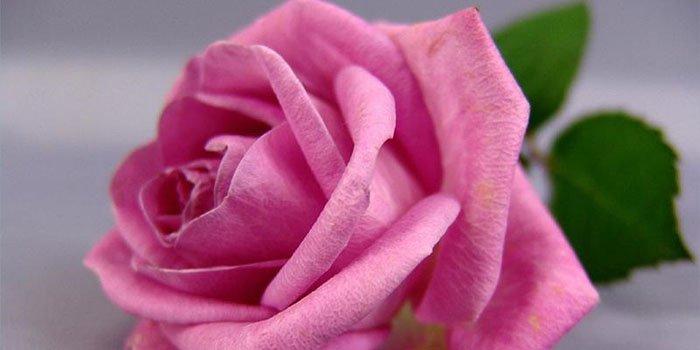 Роза из бумаги: цветок из салфетки