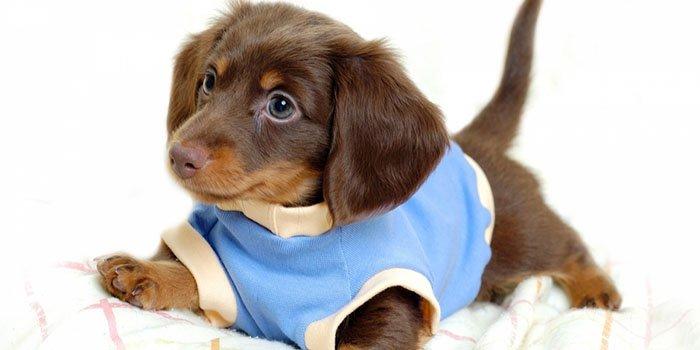 Выкройка одежды для собак своими руками