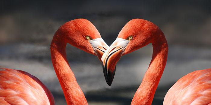 5 союзов среди знаков зодиака, в которых любовь живет дольше всего