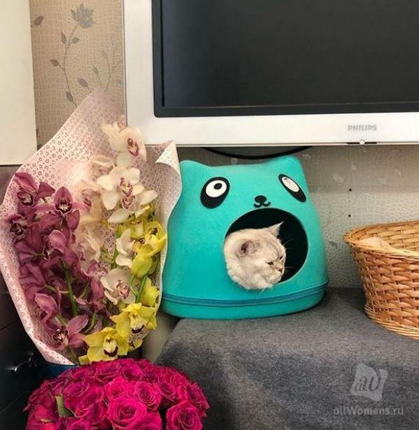 Наталья Гулькина показала своих домашних питомцев: певица является убеждённой кошатницей