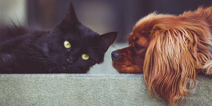 Почему одни люди любят кошек, а другие собак