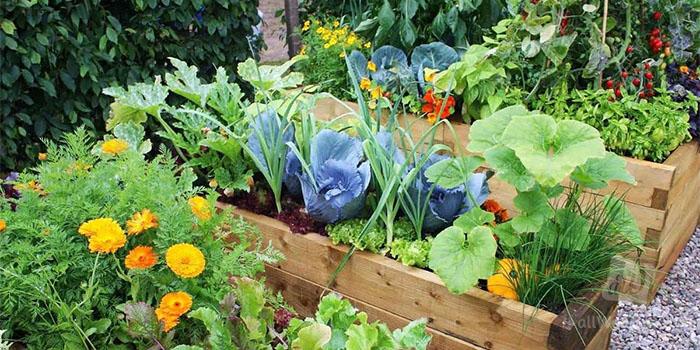 Посевной календарь огородника и садовода на сентябрь 2019 для средней