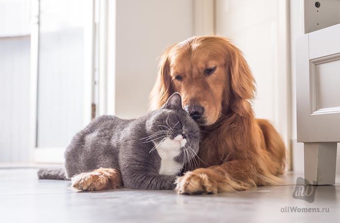 Рейтинг самых умных и дружелюбных пород собак
