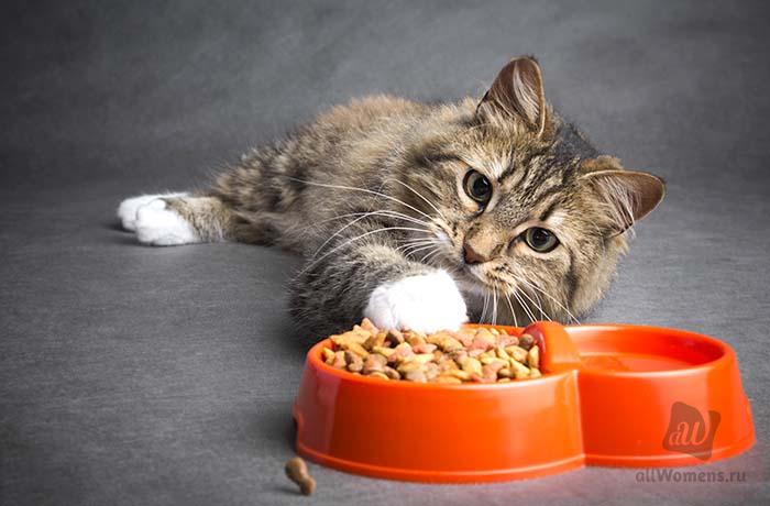 Рацион для киски: 5 самых лучших кормов для кошек